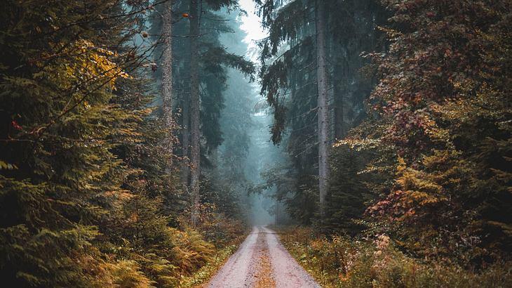 Der Elch kehrt nach Deutschland zurück (Symbolfoto).