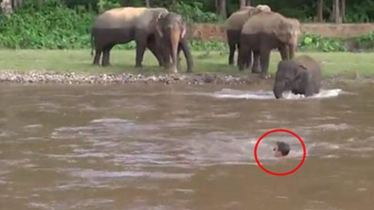 Elefant retten Menschen