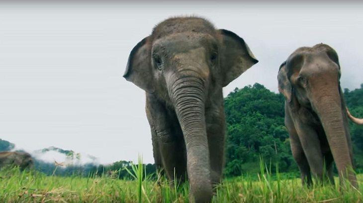 Elefanten im Tierschutzgebiet