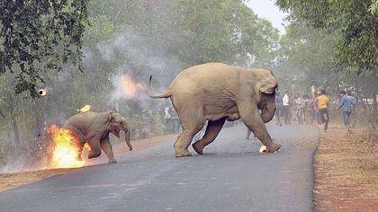 Preisgekröntes Foto: Tierquäler zünden Baby-Elefanten an