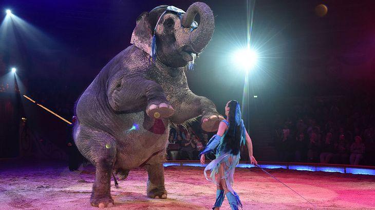 Kunststrücke lernen Elefanten nur mit der Elefantenhaken