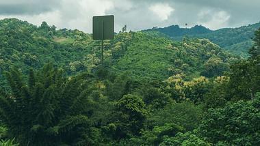 Emrod-Masten im Dschungel - Foto: Emrod