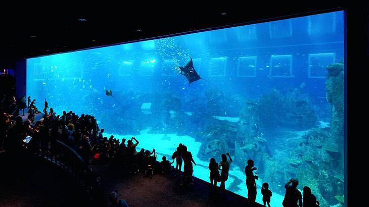 Equarius hotel schlafen in einem der gr ten aquarien der for Besondere hotels weltweit