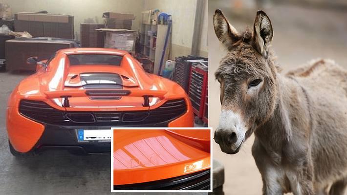 Esel verwechselt Sportwagen mit Wurzelgemüse