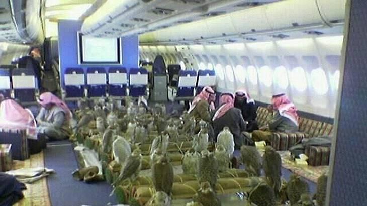 Ein arabischer Scheich hat 80 Flugtickets für seine Falken gekauft