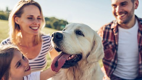 Familienurlaub mit Hund - Foto: iStock / Vasyl Dolmatov