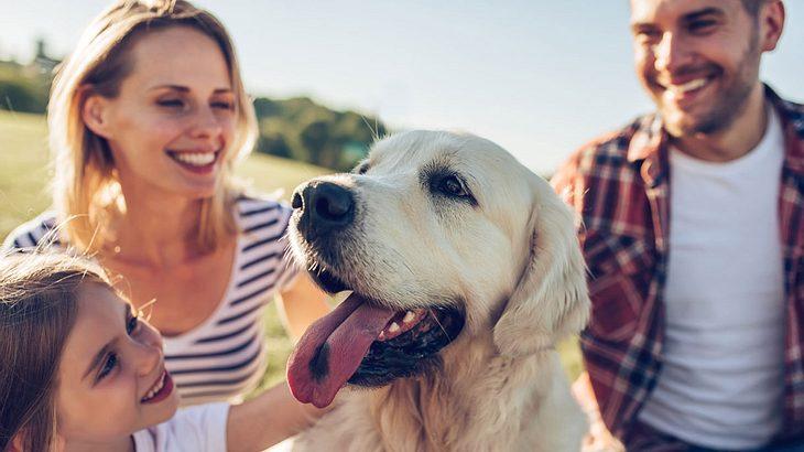 Urlaub mit Hund: Die 10 besten Locations für tolle Ferien mit Hund