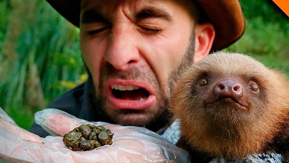 Ein Faultier kackt Tierexperte Coyote Peterson in die Hand