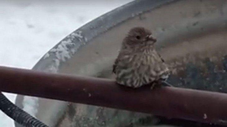 Mann befreit festgefrorenen Vogel