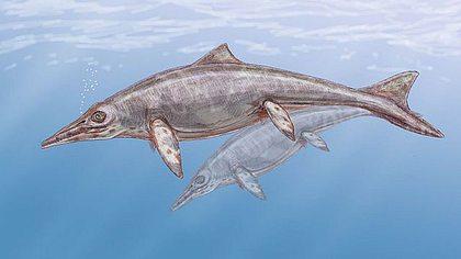Zeichnung eines Ichthyosauriers - Foto: Creative Commons / CC BY-SA 3.0