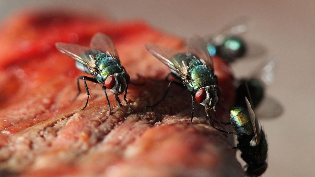 Fliegen auf Essen