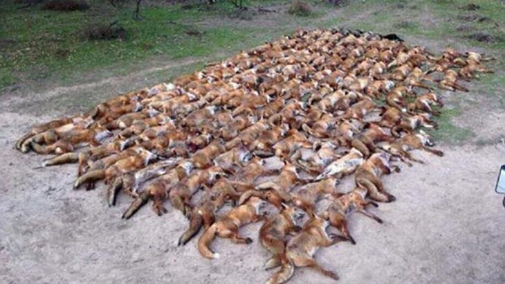 Ex-Fußballer und Schauspieler Vinnie Jones erschießt 100 Füchse