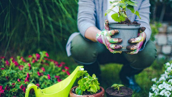 Deshalb streuen Gartenprofis Zimt in ihre Beete
