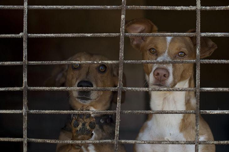 """""""Hunde KGB"""" reinigt Russlands Städte"""