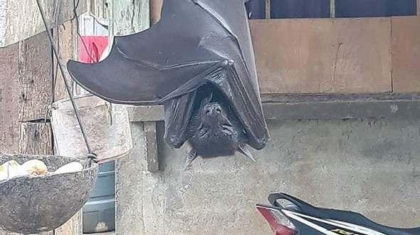 Schockierendes Foto einer gigantischen Fledermaus ist tatsächlich kein Fake