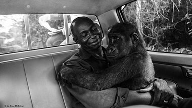 Wildlife Photo of the Year 2018 Gorilla - Foto:  Jo-Anne McArthur / Natural History Museum