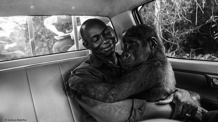 Wildlife Photo of the Year 2018 Gorilla