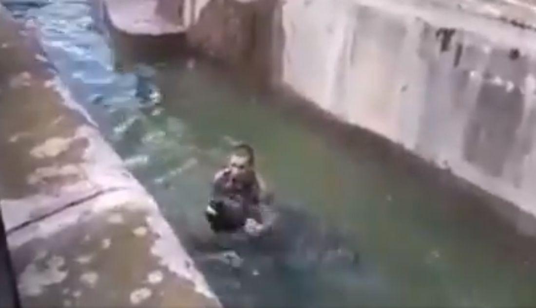 Mann kämpft im Wasser mit einem Bären