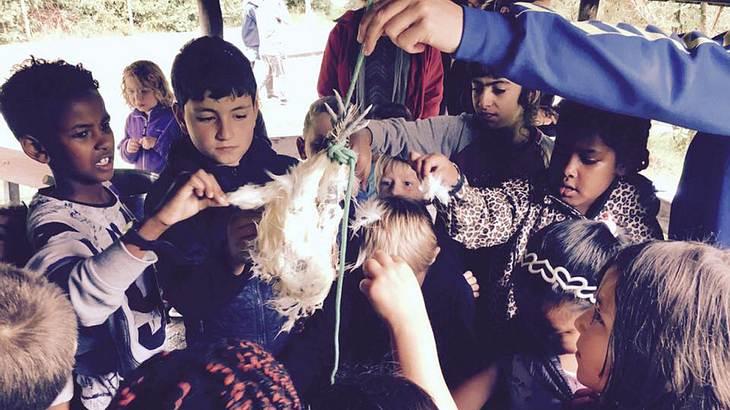 Die Kinder können sich das geschlachtete Tier anschauen