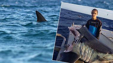 Fischer findet gigantischen Kopf eines riesigen Hais - abgebissen!