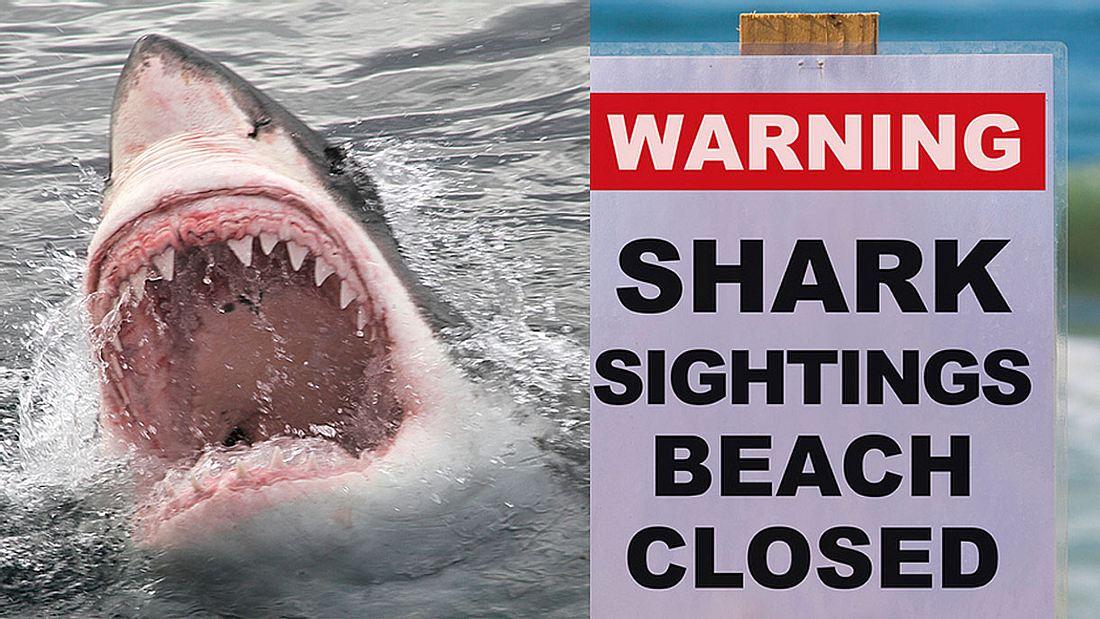 Haiverseuchte Strände