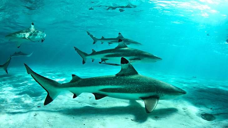 Haie dürfen nicht mehr gejagt werden