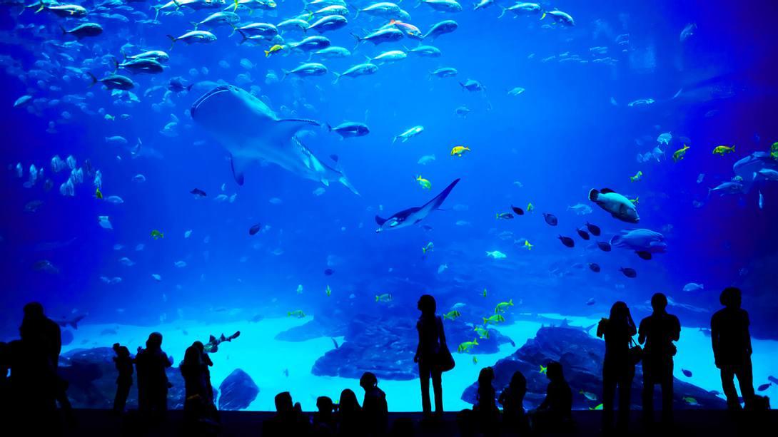Shark City wird Europas größtes Haifisch-Aquarium