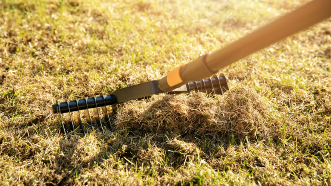 Garten-Rasenbelüftung mithilfe eines Handvertikutierers