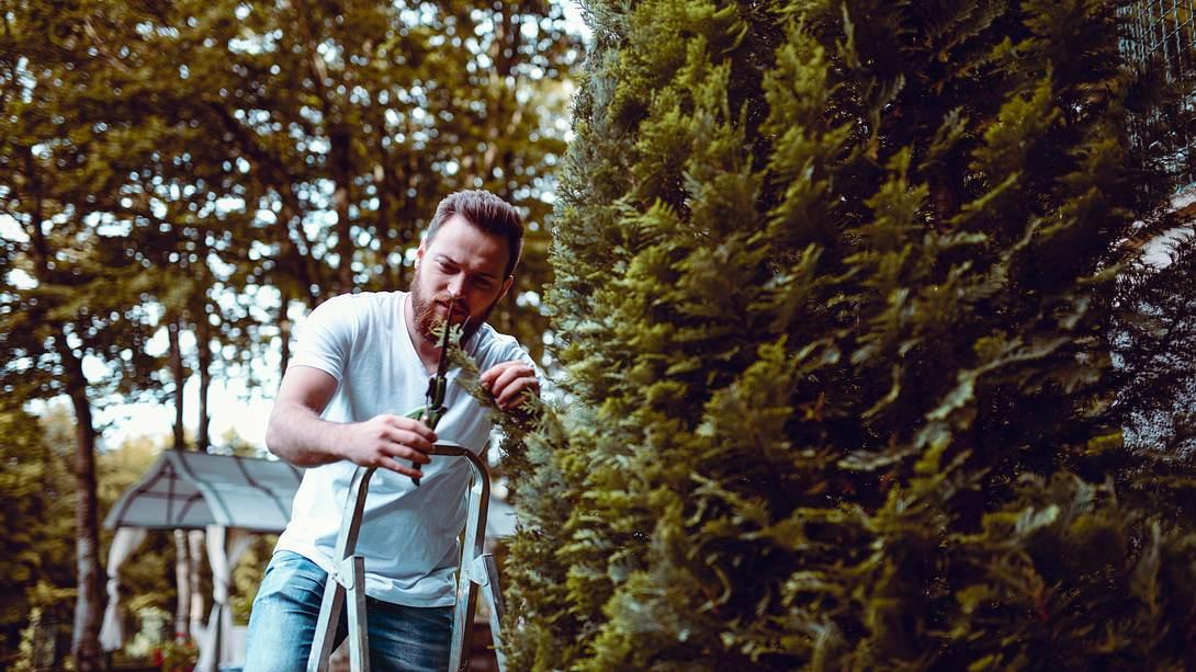 Hecke schneiden: Wann muss ich meine Hecke stutzen? - Foto: iStock / Aleksandar Georgiev