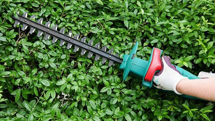 Mit der richtigen Heckenschere sieht dein Garten wieder super gepflegt aus - Foto: iStock/ricochet64
