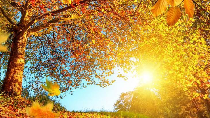 Wird es ein goldener Oktober?