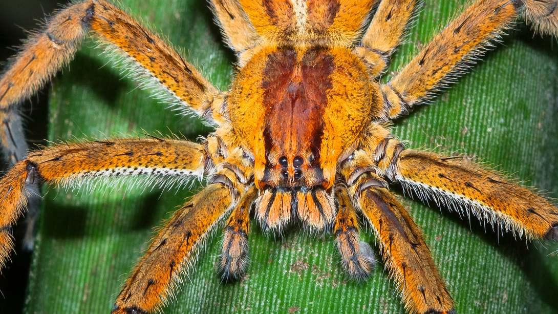 Hochgiftige Spinne in deutschem Supermarkt entdeckt – komplette Räumung