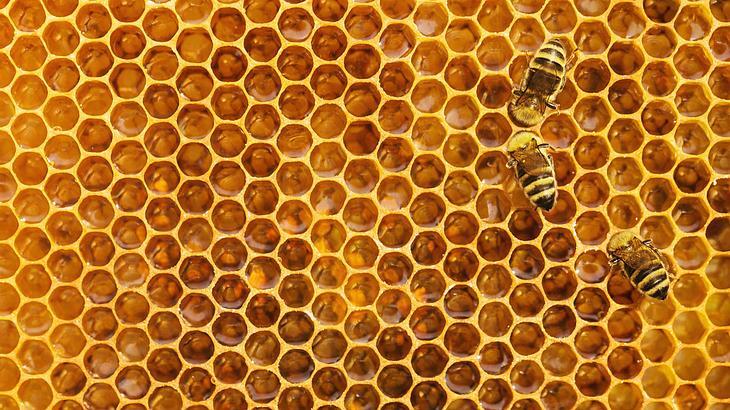Honig: Erstaunliche Fakten zur Speise der Götter