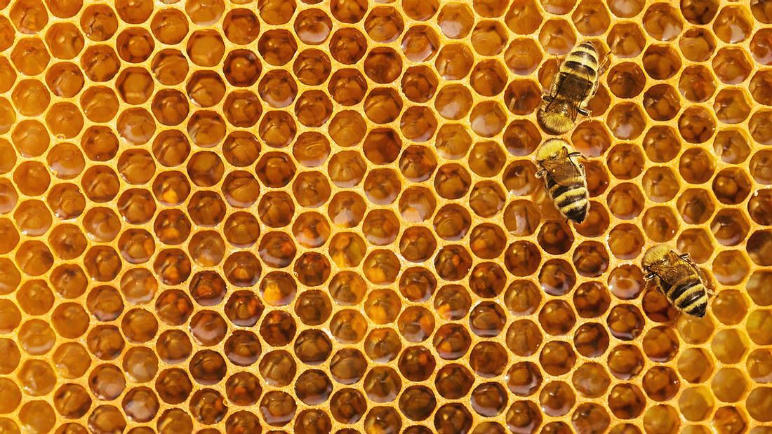 Honigwabe und Bienen