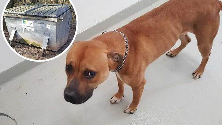 Hund in Container entsorgt