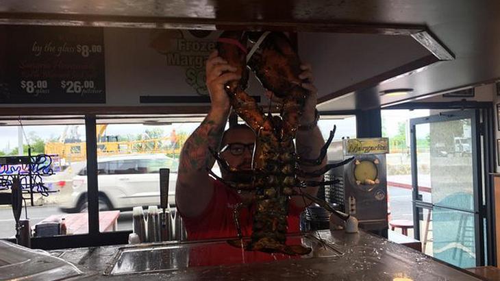 Louie The Lobster: Der 132-jähirge Hummer wurde vom New Yorker Restaurant Peters Calm Bar in die Freiheit entlassen