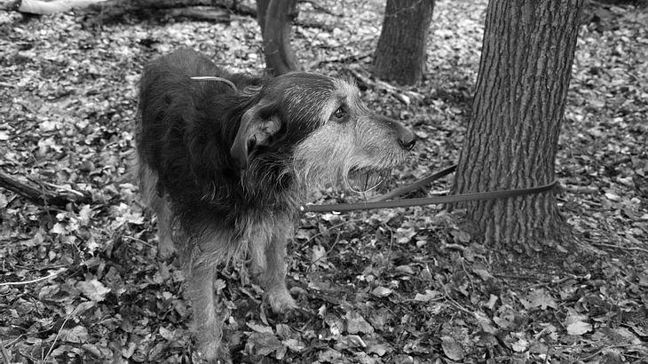 Milde Strafe für Tierquälerei: Hund ausgesetzt und erfroren