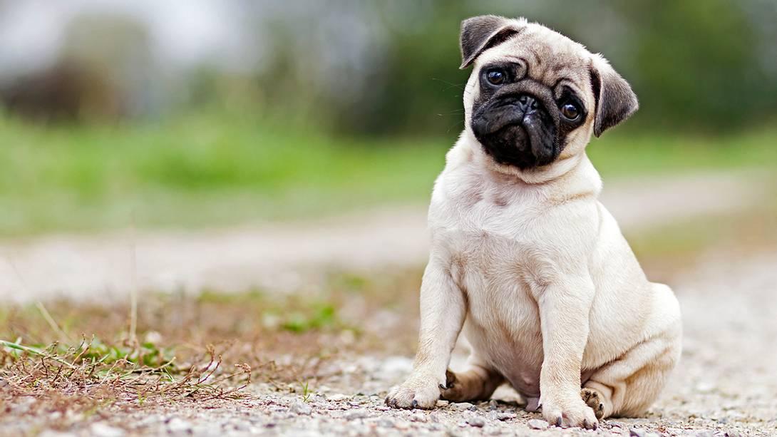 Eine Familie hat auf der A44 versucht, einen Hund auszusetzen - Foto: iStock/LexiTheMonster