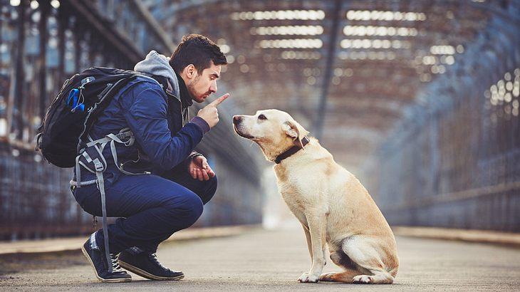 Diese 7 Fehler machen fast alle Hundebesitzer