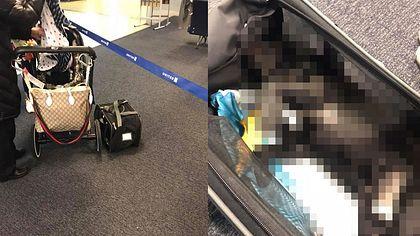 Hund stirbt, weil Flugbegleiter ihn ins Gepäckfach zwängt