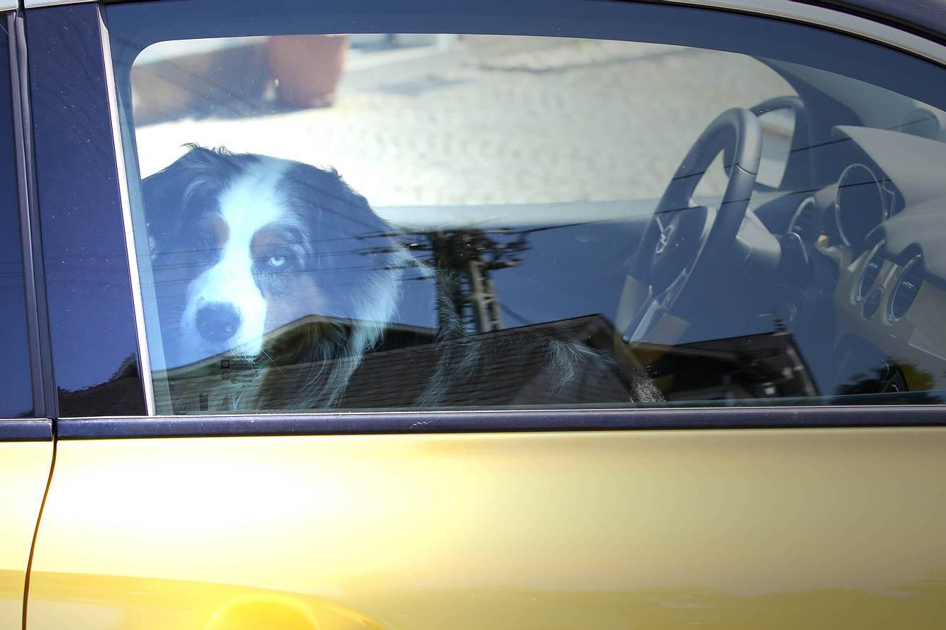 Hund im Auto eingeschlossen