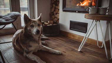 Entspannung vor dem Kaminfeuer - Foto: iStock / svetikd