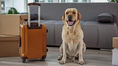 Hund in Reisevorfreude - Foto: iStock / YakobchukOlena