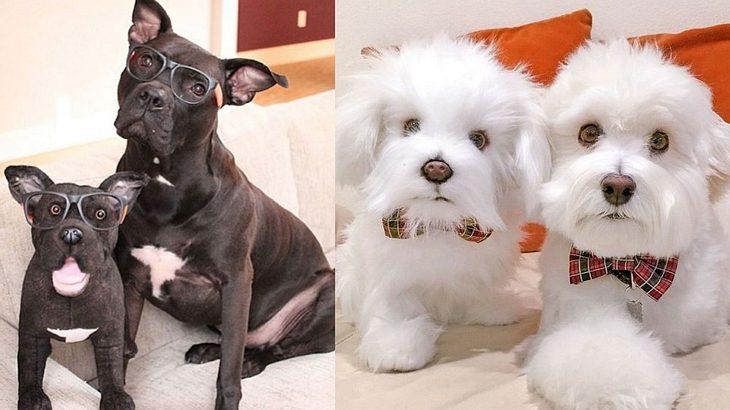 Du kannst jetzt eine Teddy-Klon deines Hundes kaufen