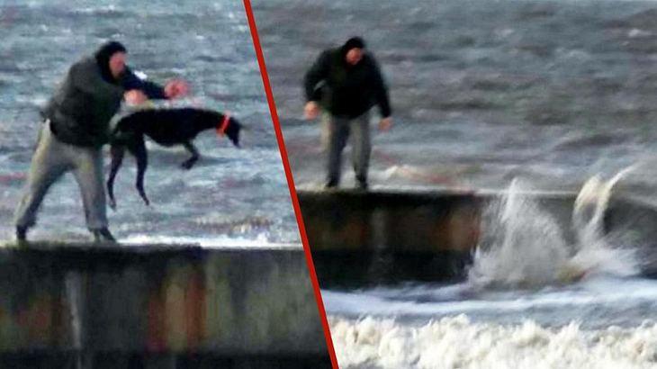 Tierquälerei in Hartlepool: Dieser Mann wirft seinen Hund immer wieder in die Nordsee
