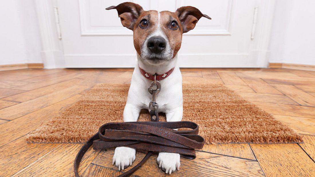 Hunde mit Leine auf den Pfoten