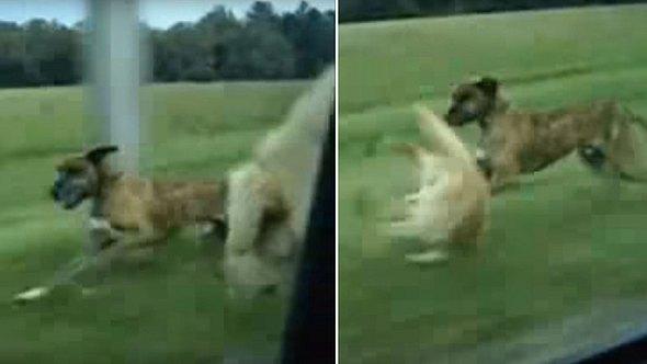 Hund springt aus fahrendem Auto - Foto: YouTube / 1ElmoLeon1