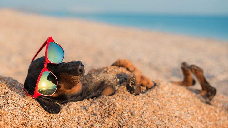 Stilsicherer Hund entspannt am Strand