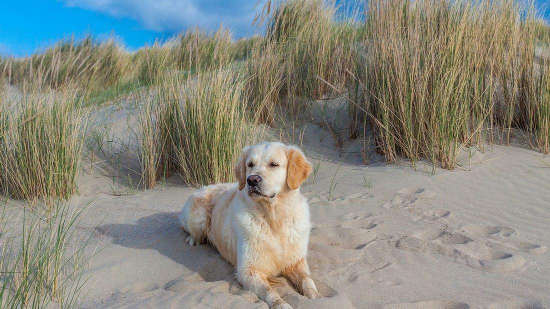 Ein Hund erholt sich am Strand