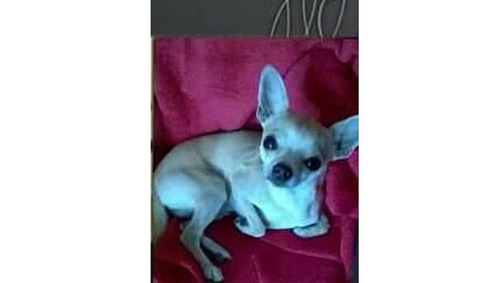 Chihuahua Arthur wurde in Potsdam von Unbekannten zu Tode getreten. Die Polizei sucht Zeugen
